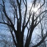 Arnold Arboretum, Jamaica Plain, Massachusetts