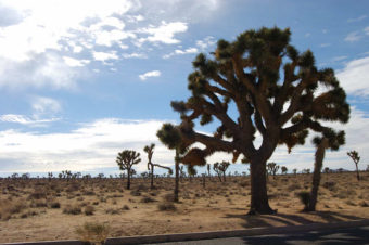 Desert Grace in Joshua Tree National Park