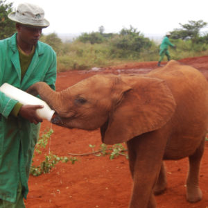 Elephant Nursery and Rehabilitation Center in Kenya - photography by Jenny SW Lee