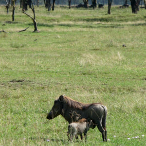 Safari Kenya - photography by Jenny SW Lee