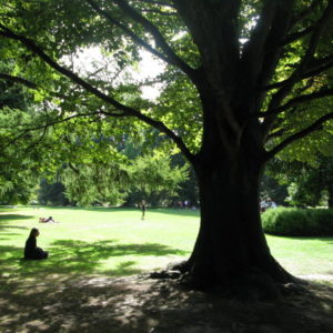 Meditation under a tree.