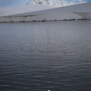 Gouldier Island Antarctica - photography by Jenny SW Lee