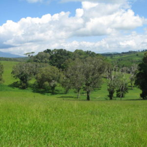 pastures of Atherton tablelands