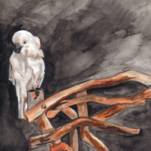 Cockatoo (part of a series of approx. 30 pieces) - watercolor