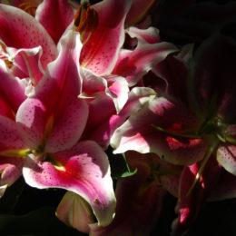 Bloedel Floral Conservatory