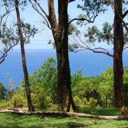 Waikamoi Nature Trail hike