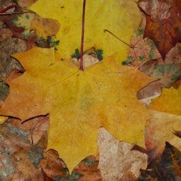 Autumn in Fairview