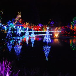 VanDusen Festival of Lights | Jenny S.W. Lee Photography