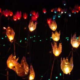plastic bottle tulip lights