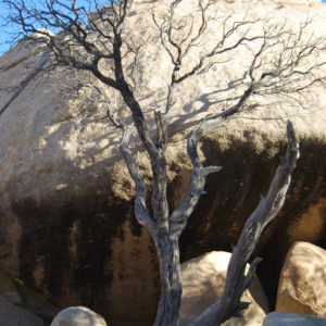 Joshua Tree National Park - photography by Jenny SW Lee