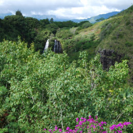 Wailua River Valley