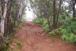 One of the many muddy trails in Kauai was the Pihea Trail in Koke'e State Park