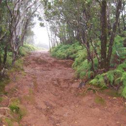 Pihea Trail in Koke'e State Park
