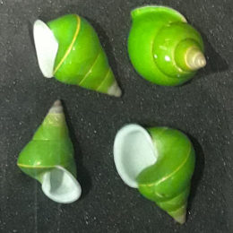 Green tree snails