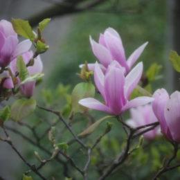 Spring April
