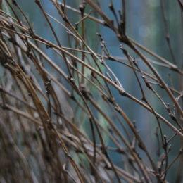Arashiyama Bamboo Grove, Kyoto | Photography by Jenny S.W. Lee
