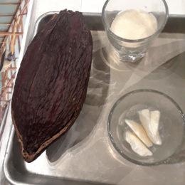 Ecuador Cacao bean and butter
