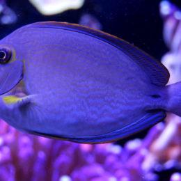 Seattle Aquarium   Photography by Jenny S.W. Lee