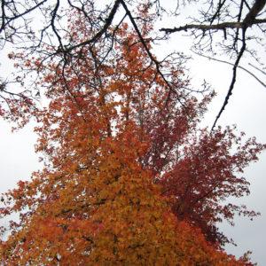 Autumn in Kirkland, WA | Photography by Jenny SW Lee