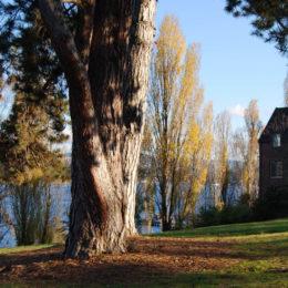 Mercer Island, Washington   Photography by Jenny S.W. Lee