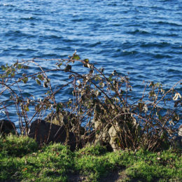 Golden Gardens Park   Photography by Jenny S.W. Lee