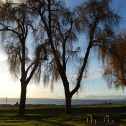 Golden Gardens Park | Photography by Jenny S.W. Lee