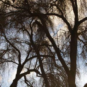 Golden Gardens Park, Washington   Photography by Jenny SW Lee