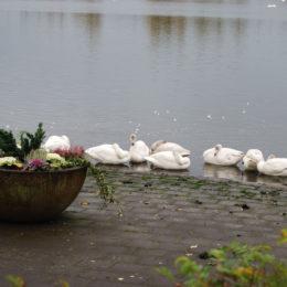 Tjörnin lake