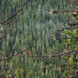 Rainier National Park   Photography by Jenny SW Lee